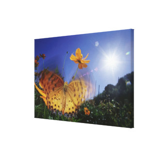 Close-up of butterfly, flapping wings stretched canvas print