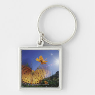 Close-up of Butterfly, flapping wings Keychain