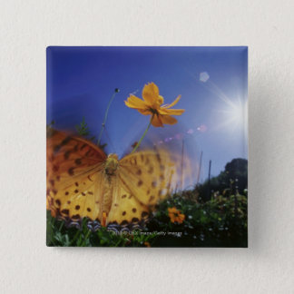 Close-up of Butterfly, flapping wings Pinback Button