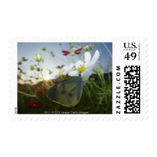Close-up of butterfly on flower postage stamp