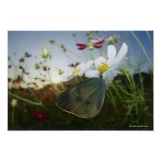 Close-up of butterfly on flower poster