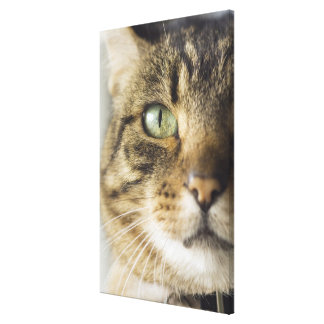 Close-up of cat (focus on eye) canvas print
