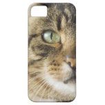 Close-up of cat (focus on eye) iPhone SE/5/5s case