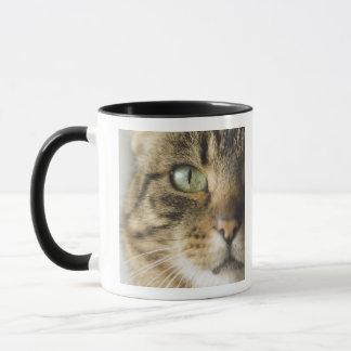 Close-up of cat (focus on eye) mug