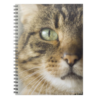 Close-up of cat (focus on eye) notebook