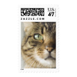 Close-up of cat (focus on eye) postage