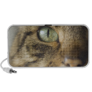 Close-up of cat (focus on eye) travelling speaker