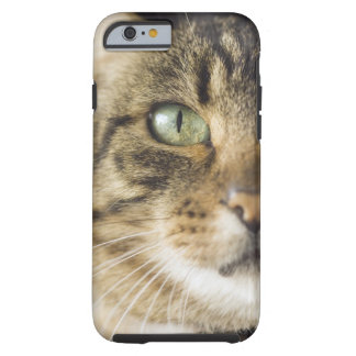 Close-up of cat (focus on eye) tough iPhone 6 case