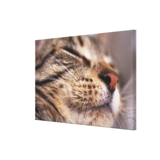 Close-up of cat whiskers and muzzle gallery wrap canvas