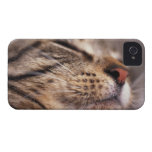 Close-up of cat whiskers and muzzle iPhone 4 Case-Mate cases
