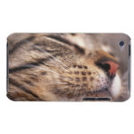 Close-up of cat whiskers and muzzle barely there iPod cover