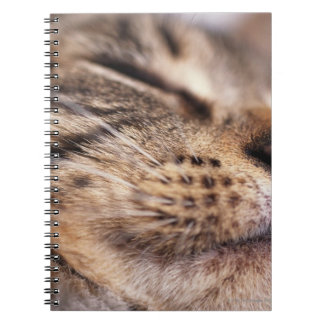 Close-up of cat whiskers and muzzle notebook