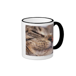Close-up of cat whiskers and muzzle ringer mug
