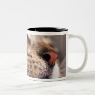 Close-up of cat whiskers and muzzle Two-Tone coffee mug