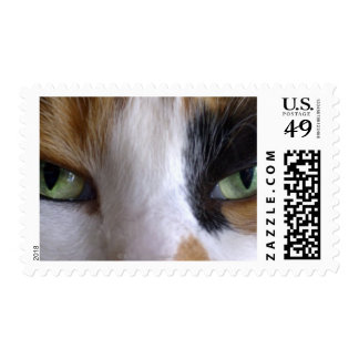 Close-up of cat's eyes stamp
