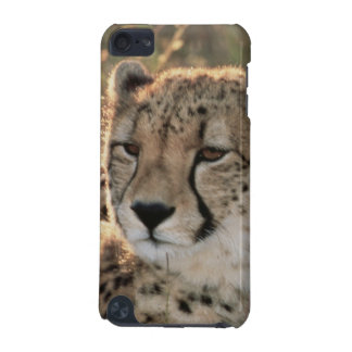 Close-up of Cheetahs iPod Touch (5th Generation) Cover