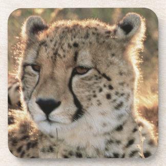 Close-up of Cheetahs Drink Coaster