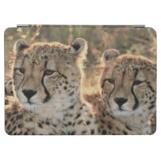 Close-up of Cheetahs iPad Air Cover