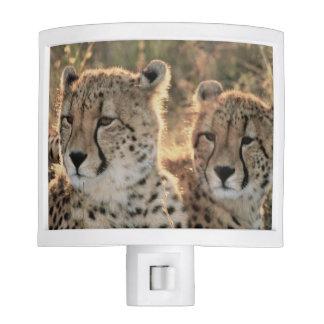 Close-up of Cheetahs Night Light