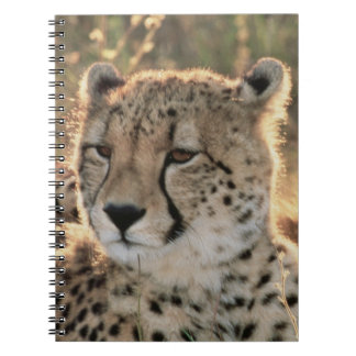 Close-up of Cheetahs Spiral Note Books