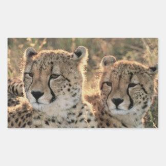 Close-up of Cheetahs Rectangle Sticker