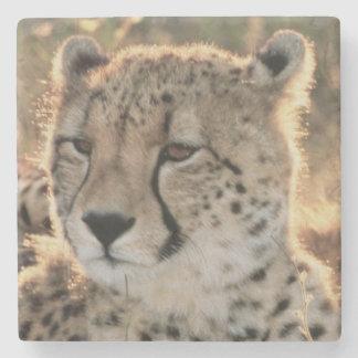 Close-up of Cheetahs Stone Coaster