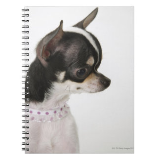 Close-up of Chihuahua, side view Notebook