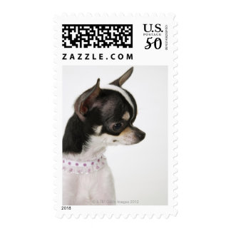 Close-up of Chihuahua, side view Postage