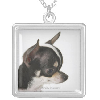 Close-up of Chihuahua, side view Silver Plated Necklace