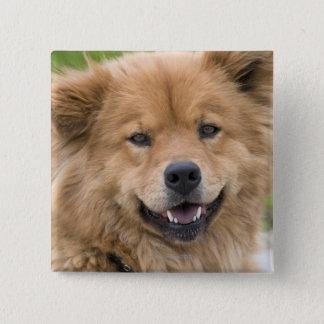 Close up of chow mix dog outdoors. pinback button