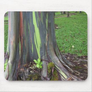 Close-up of colorful eucalyptus tree bark mouse pad