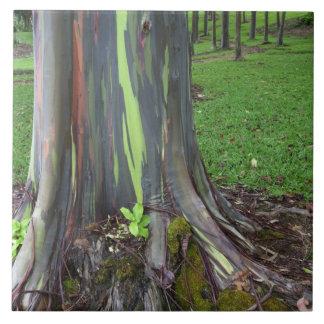 Close-up of colorful eucalyptus tree bark tile