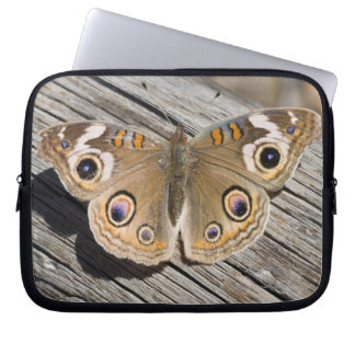 Close up of common buckeye butterfly (Junonia Laptop Computer Sleeve