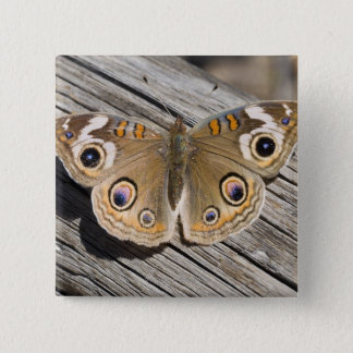Close up of common buckeye butterfly (Junonia Pinback Button