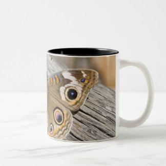 Close up of common buckeye butterfly (Junonia Two-Tone Coffee Mug