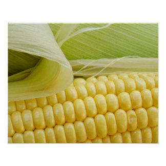 Close up of corn posters