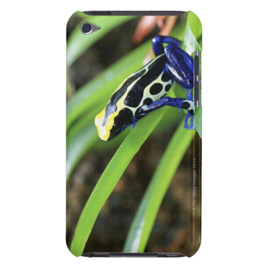 Close-up of Costa Rican Cobalt Dyeing Dart Frog Barely There iPod Case