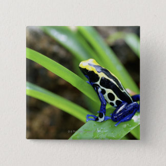 Close-up of Costa Rican Cobalt Dyeing Dart Frog Button