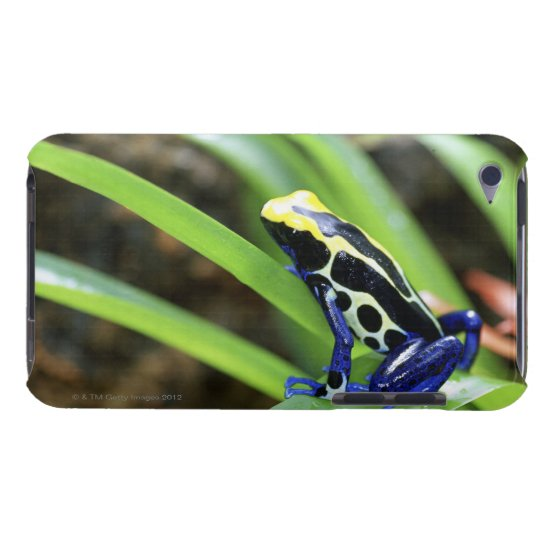 Close-up of Costa Rican Cobalt Dyeing Dart Frog Case-Mate iPod Touch Case