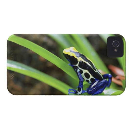Close-up of Costa Rican Cobalt Dyeing Dart Frog iPhone 4 Case-Mate Case