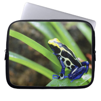 Close-up of Costa Rican Cobalt Dyeing Dart Frog Laptop Computer Sleeves