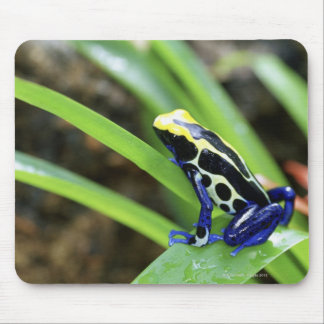 Close-up of Costa Rican Cobalt Dyeing Dart Frog Mouse Pad