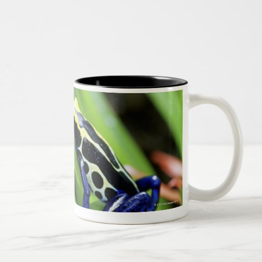 Close-up of Costa Rican Cobalt Dyeing Dart Frog Two-Tone Coffee Mug