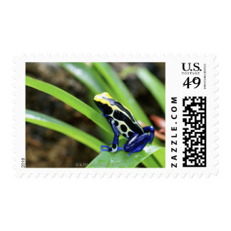 Close-up of Costa Rican Cobalt Dyeing Dart Frog Postage
