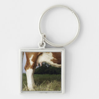 Close up of cow in rural landscape keychain