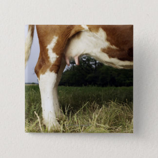 Close up of cow in rural landscape pinback button