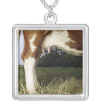 Close up of cow in rural landscape silver plated necklace