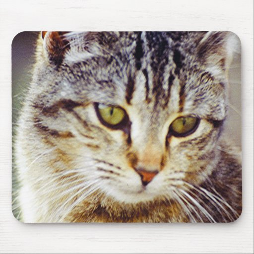 Close Up Of Cute Pet Cat Bernice With Light Brown Mouse Pads