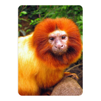 Close-Up of Cute Primate With Orange Fur Card