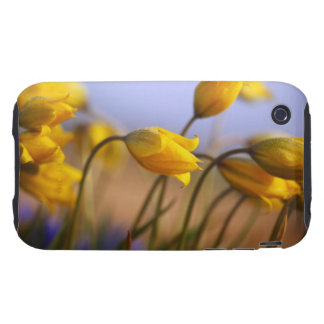 Close-up of daffodils iPhone 3 tough covers